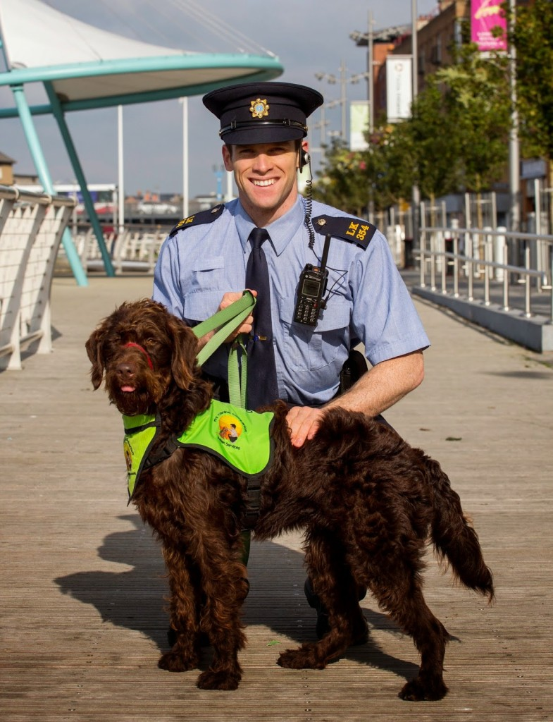 dog-fouling-in-limerick