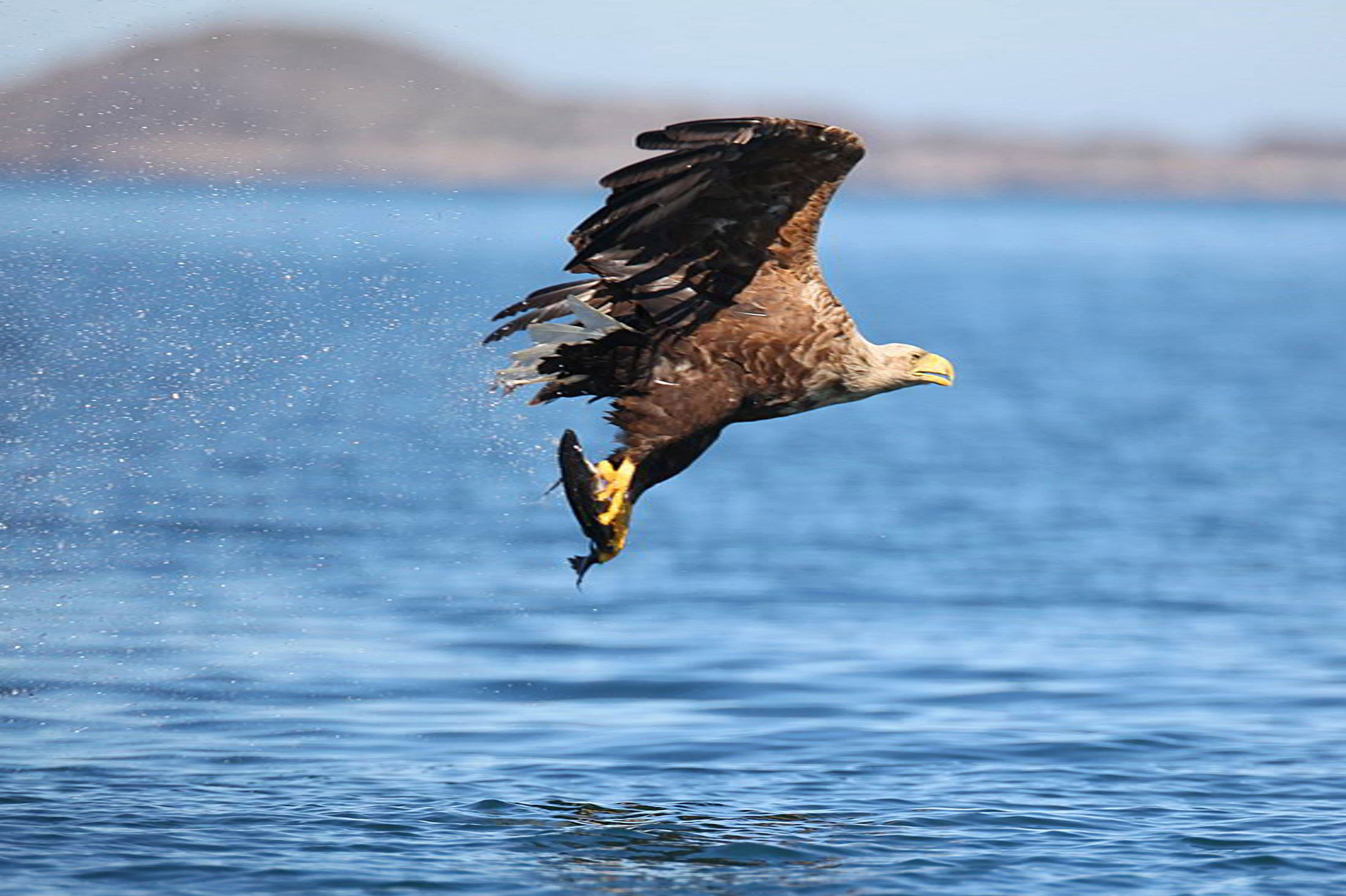 Lough Derg eagles to soar again this summer